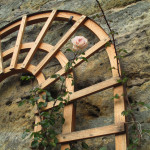 Poslední růže (Svatomartinská)