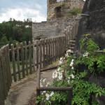 Východní terasa  s růží Filipes Kiftsgate (2)