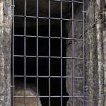 Okenní otvor s mříží. Návrh Ivan Volman, provedení kovář Josef Skuhravý