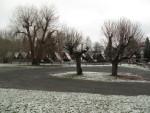 Skupina stromů na parkovišti před zásahem