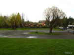 Stromy na parkovišti dnes