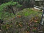Zajištění borovice proti vyvrácení